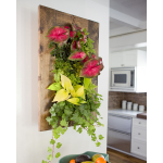 Grovert Wall Planter - Walnut